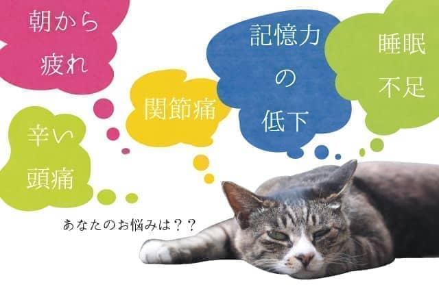 kenko_23_005-min